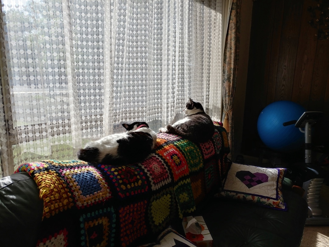 30Sep17  Synchronised sunning in the Gym catsofinstagram homegymlife 2017padhellip
