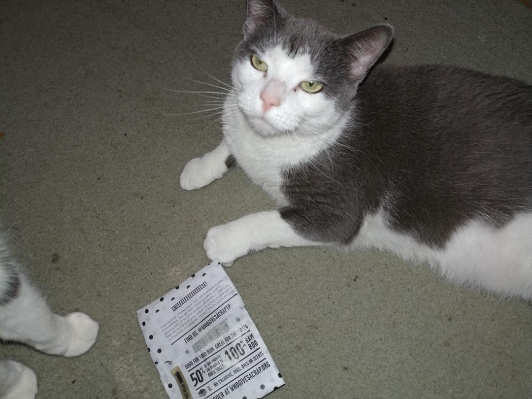 07Nov17 Neurmal is unimpressed I gave her the whogivesacraptp wrapperhellip