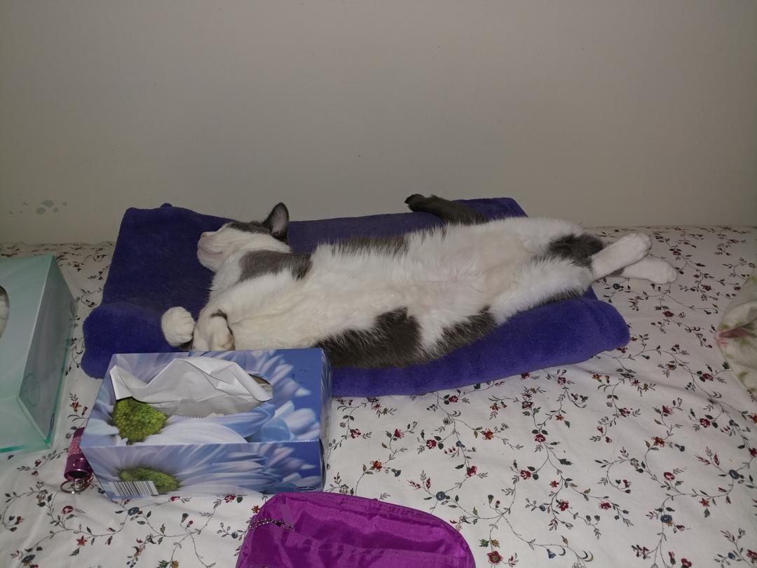 28Nov17 Cat in repose I love the crossed back pawshellip