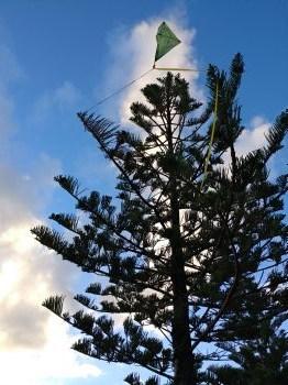 Stuck kite flying high